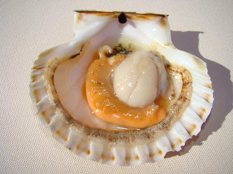 Морепродукт: морской гребешок фри / Экзотическая кулинария Cafe.Ua