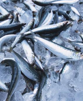 Условия замораживания рыбы