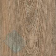 Карпатская ель - Каталог цветов