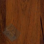 Дуб сокальский - Каталог цветов