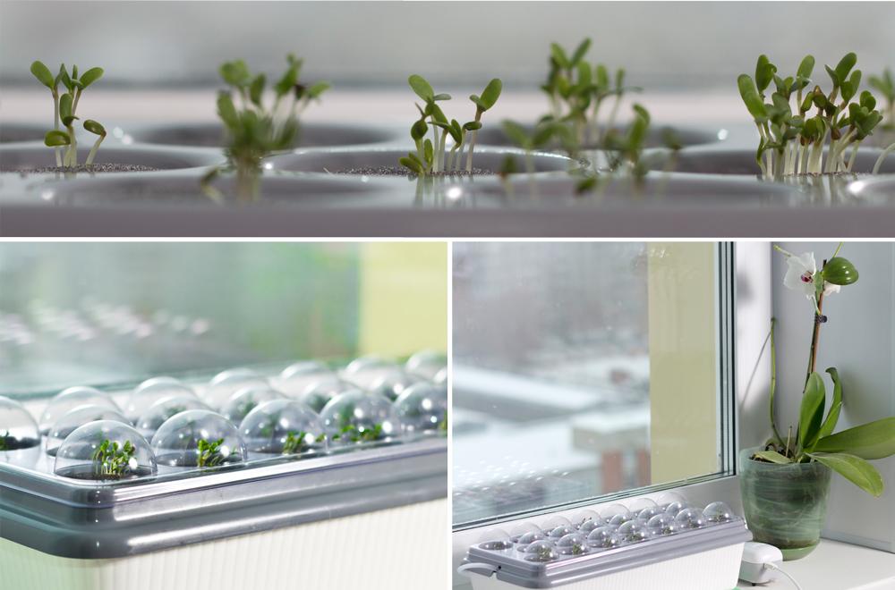 Зеленые-ростки-на-домашней-чудо_грядке.jpg